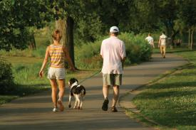 Get more walking into your daily routine encourages our Witney Chiropractor
